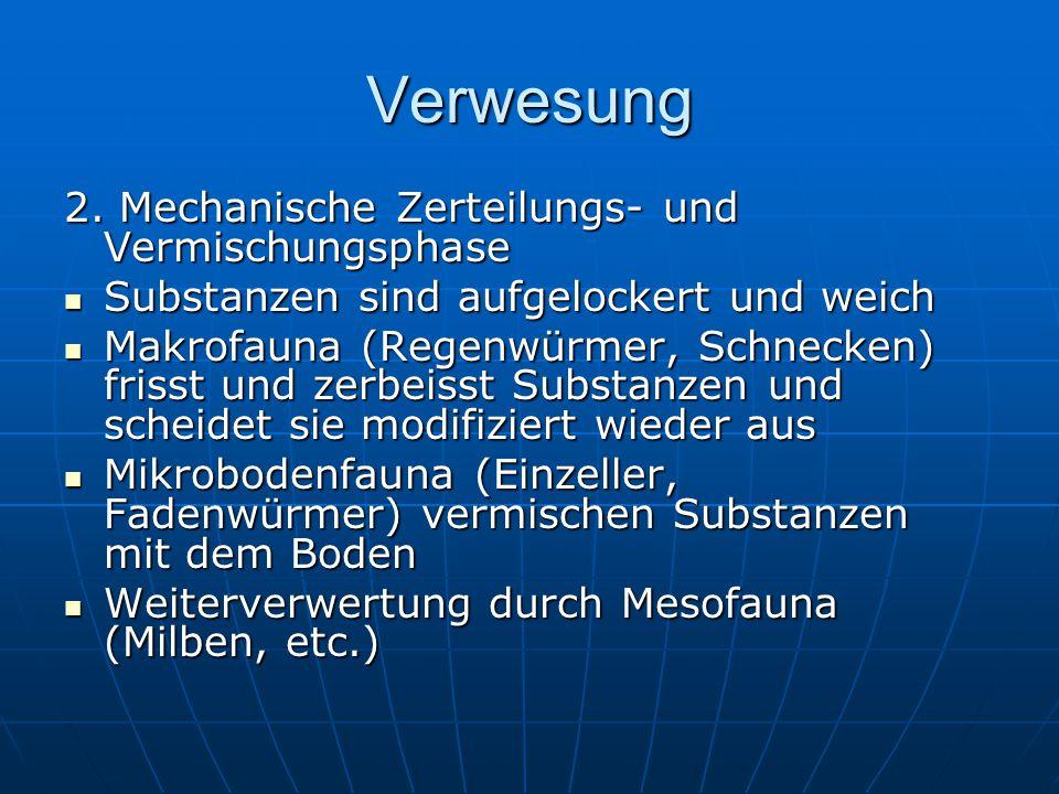 Verwesung 2. Mechanische Zerteilungs- und Vermischungsphase