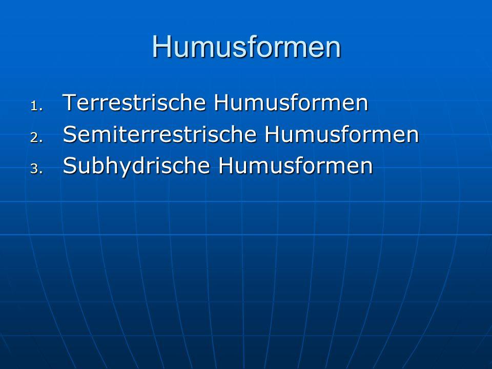 Humusformen Terrestrische Humusformen Semiterrestrische Humusformen