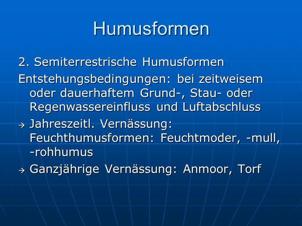 Humusformen 2. Semiterrestrische Humusformen