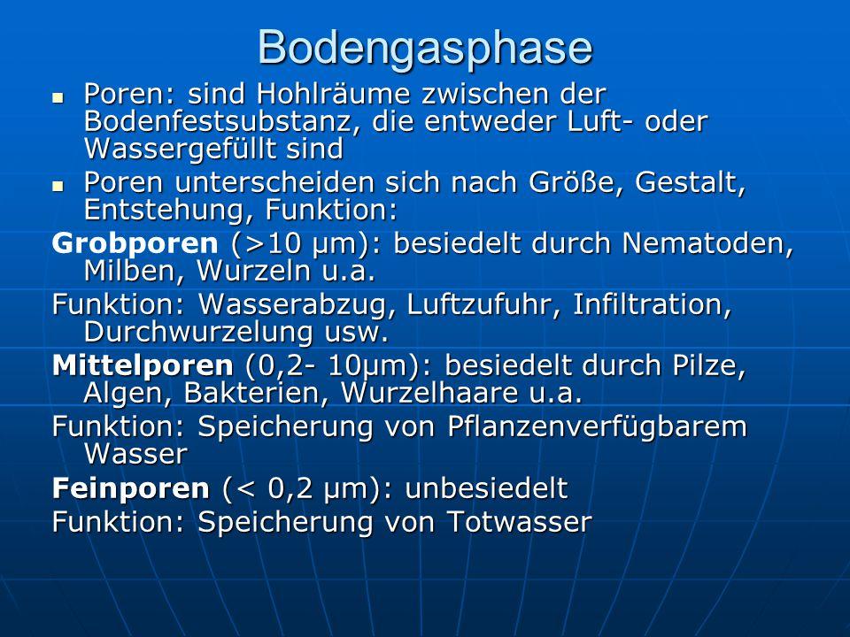 Bodengasphase Poren: sind Hohlräume zwischen der Bodenfestsubstanz, die entweder Luft- oder Wassergefüllt sind.