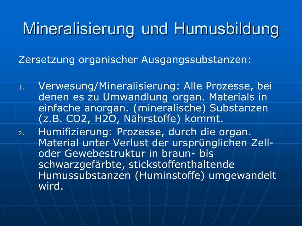 Mineralisierung und Humusbildung