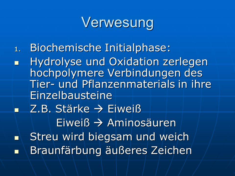 Verwesung Biochemische Initialphase: