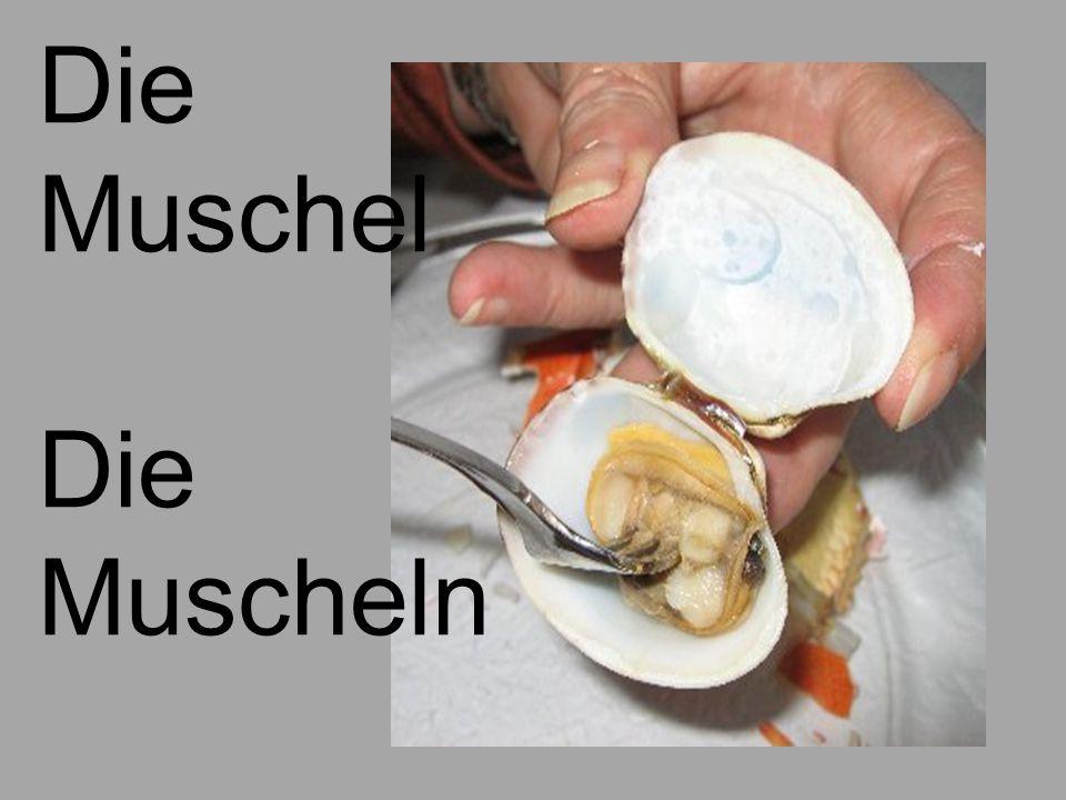Die Muschel Muscheln