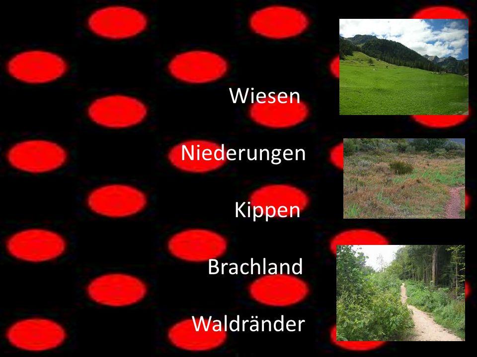 Wiesen Niederungen Kippen Brachland Waldränder Hallo