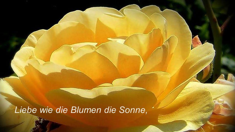 Liebe wie die Blumen die Sonne,