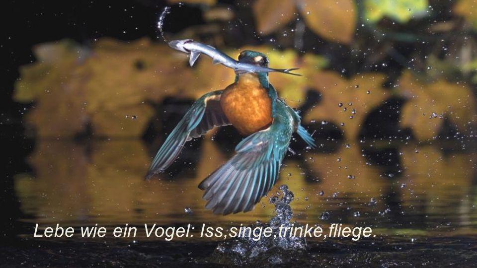 Lebe wie ein Vogel: Iss,singe,trinke,fliege.