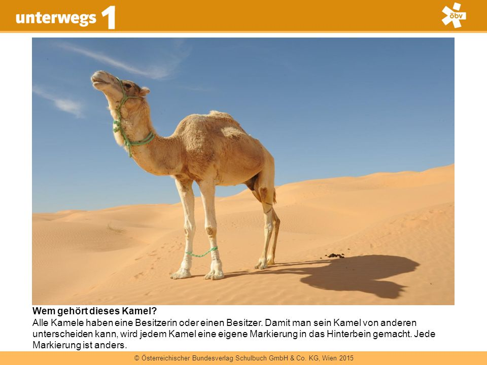 Wem gehört dieses Kamel