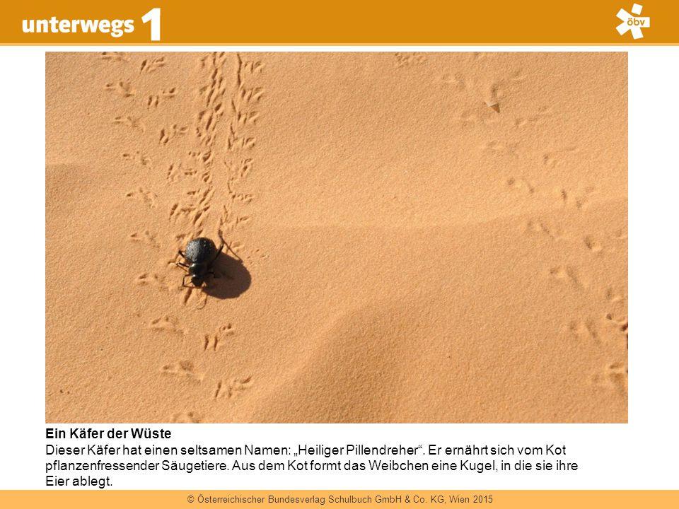 Ein Käfer der Wüste