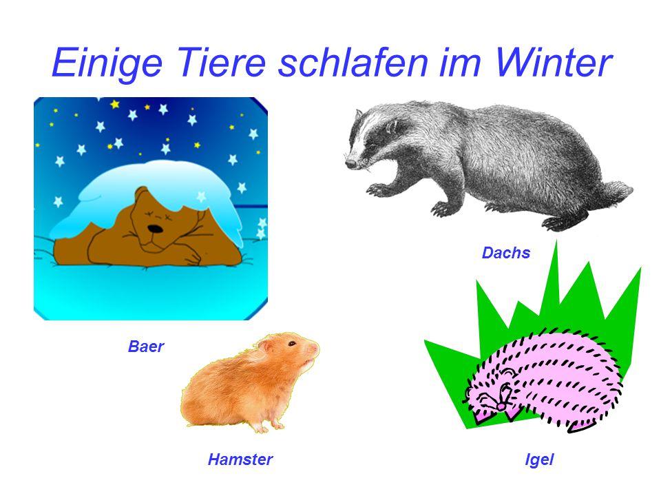 Einige Tiere schlafen im Winter