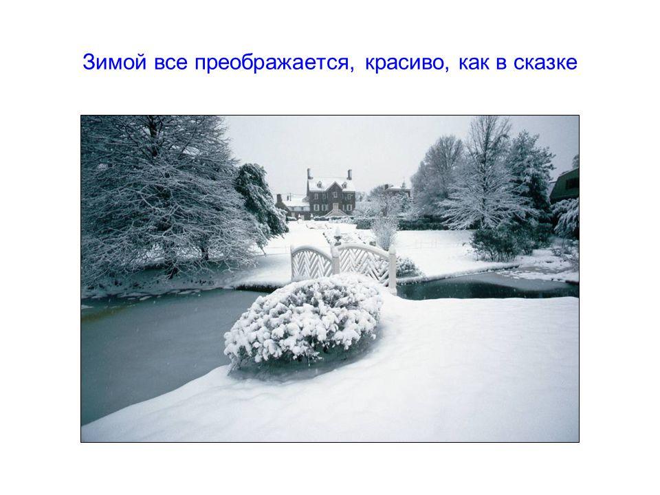 Зимой все преображается, красиво, как в сказке