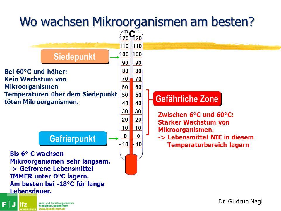 Wo wachsen Mikroorganismen am besten