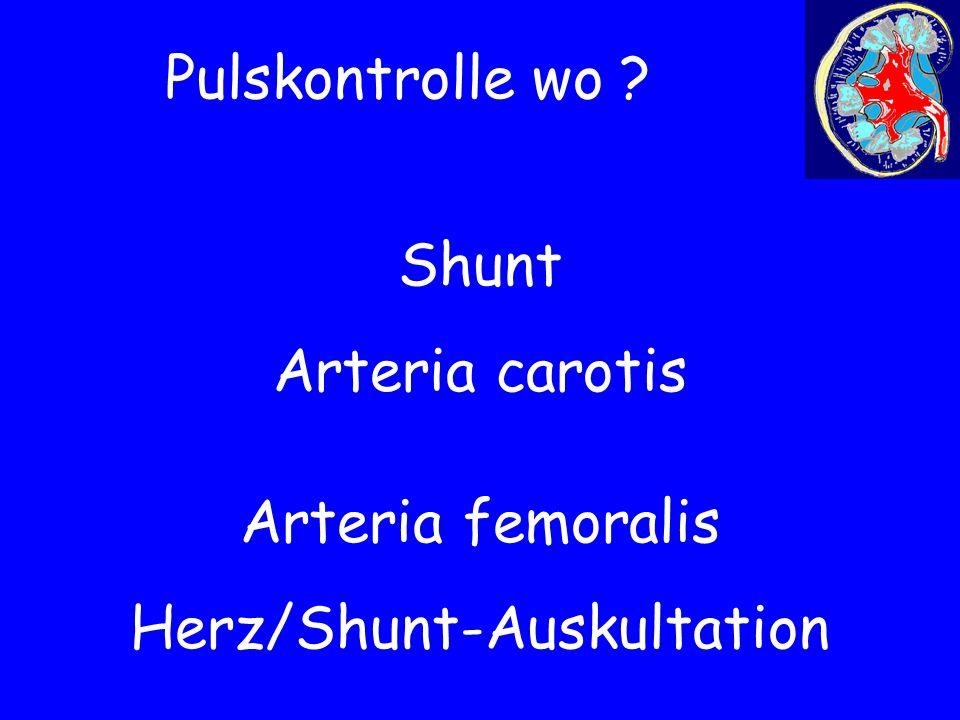 Herz/Shunt-Auskultation