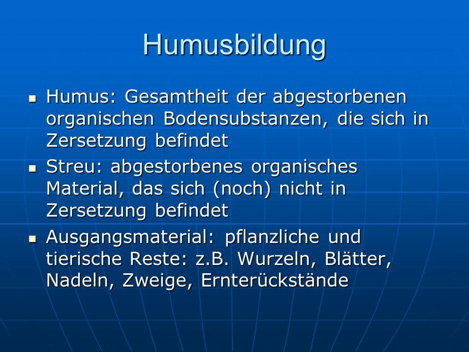 Humusbildung Humus: Gesamtheit der abgestorbenen organischen Bodensubstanzen, die sich in Zersetzung befindet.