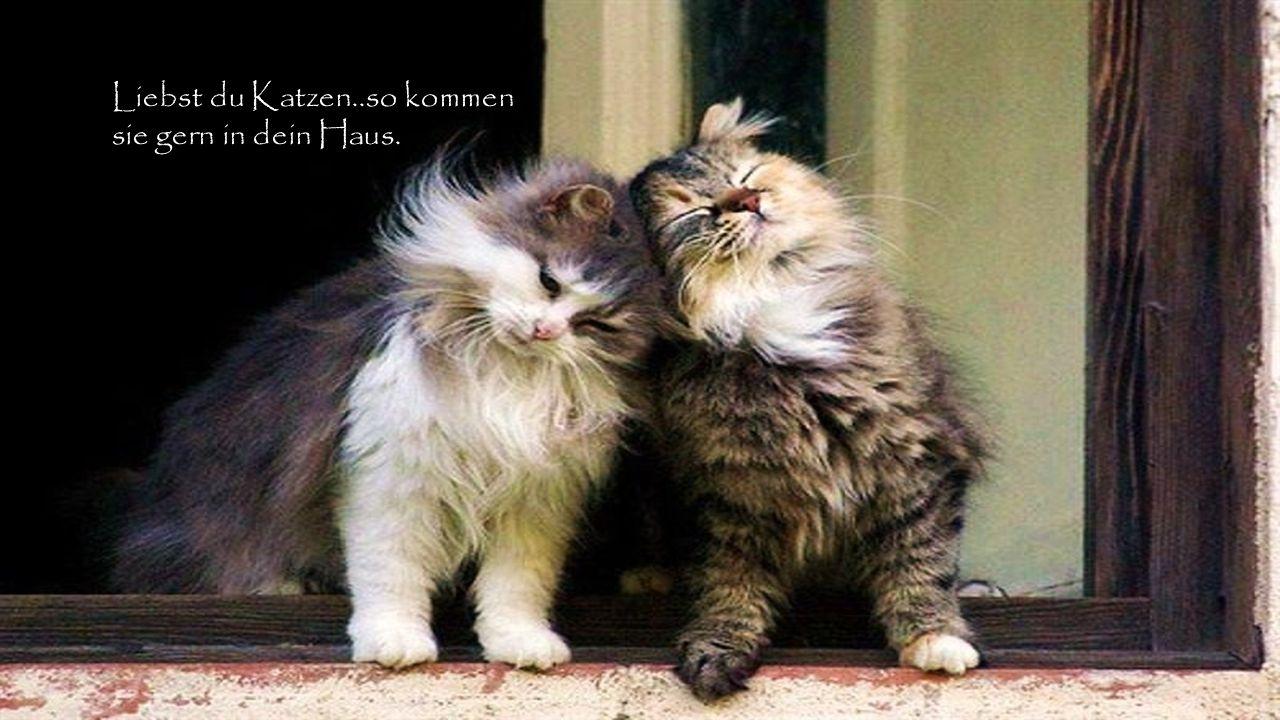 Liebst du Katzen..so kommen