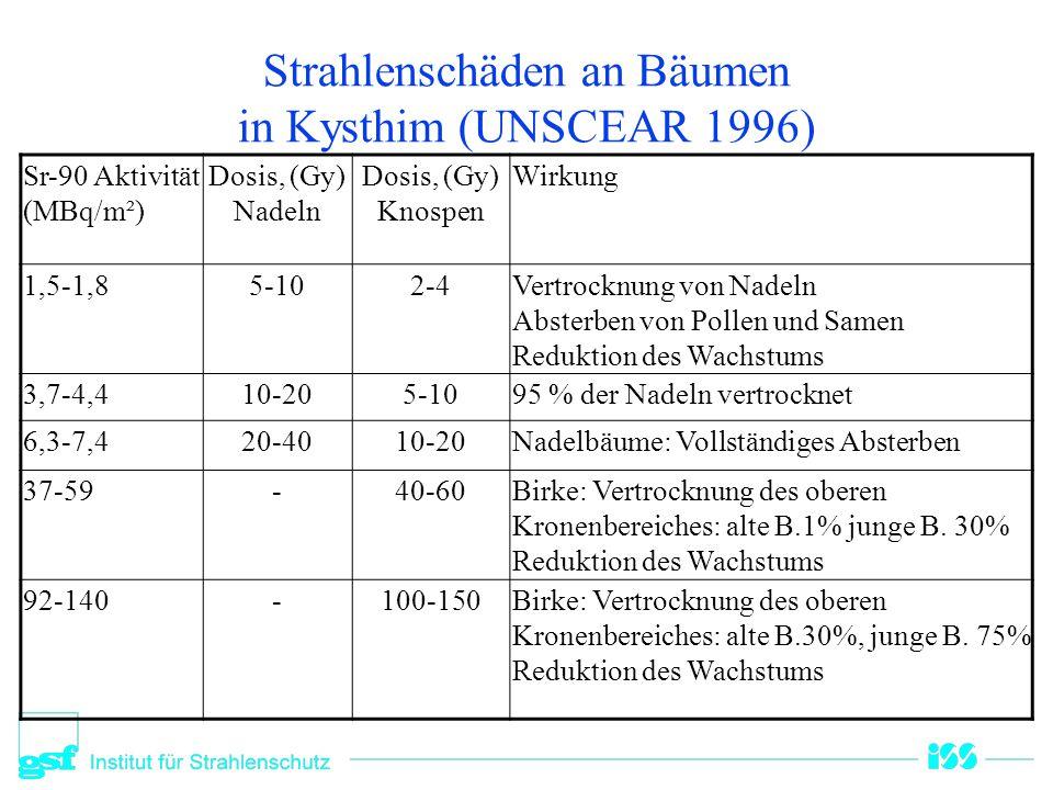 Strahlenschäden an Bäumen in Kysthim (UNSCEAR 1996)