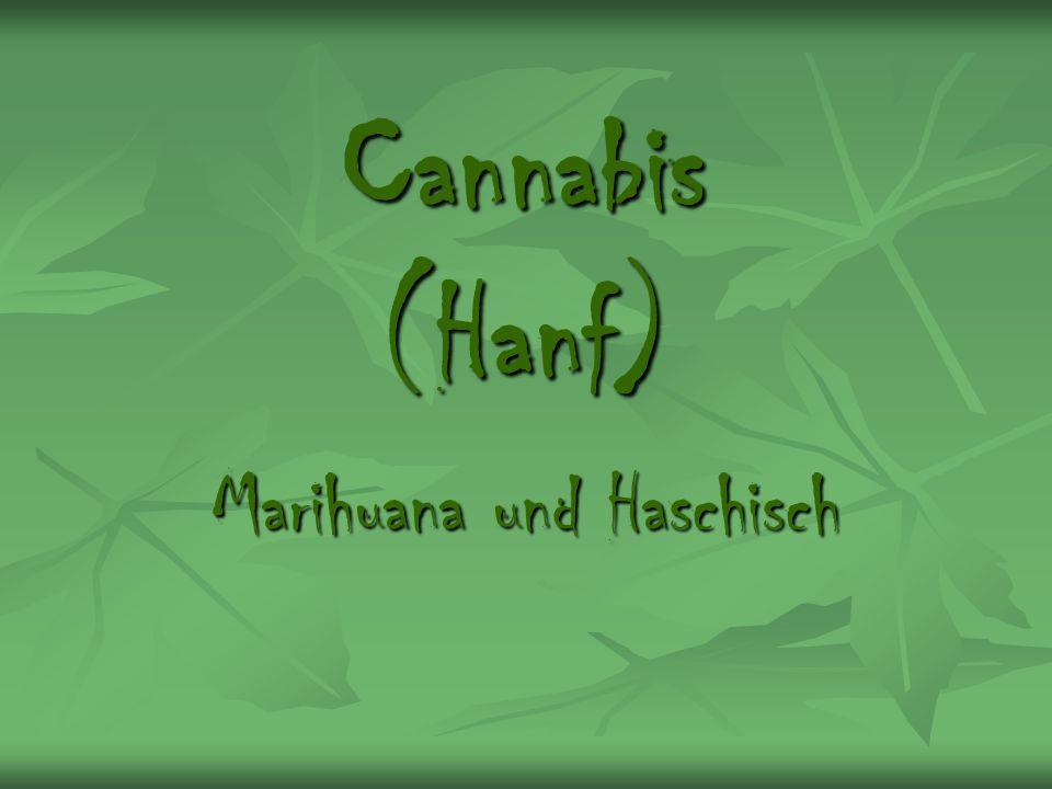 Marihuana und Haschisch