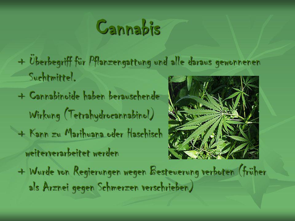 Cannabis + Überbegriff für Pflanzengattung und alle daraus gewonnenen Suchtmittel. + Cannabinoide haben berauschende.