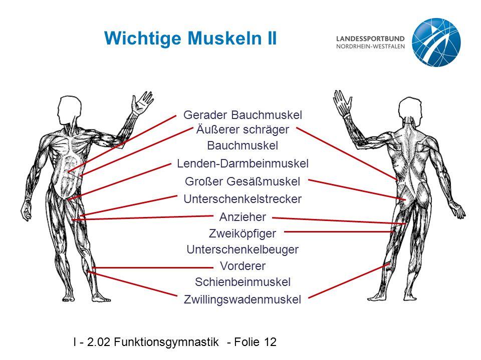 Wichtige Muskeln II Gerader Bauchmuskel Äußerer schräger Bauchmuskel