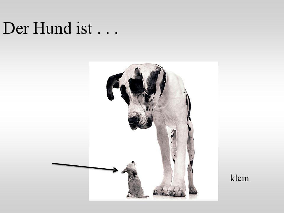 Der Hund ist . . . klein