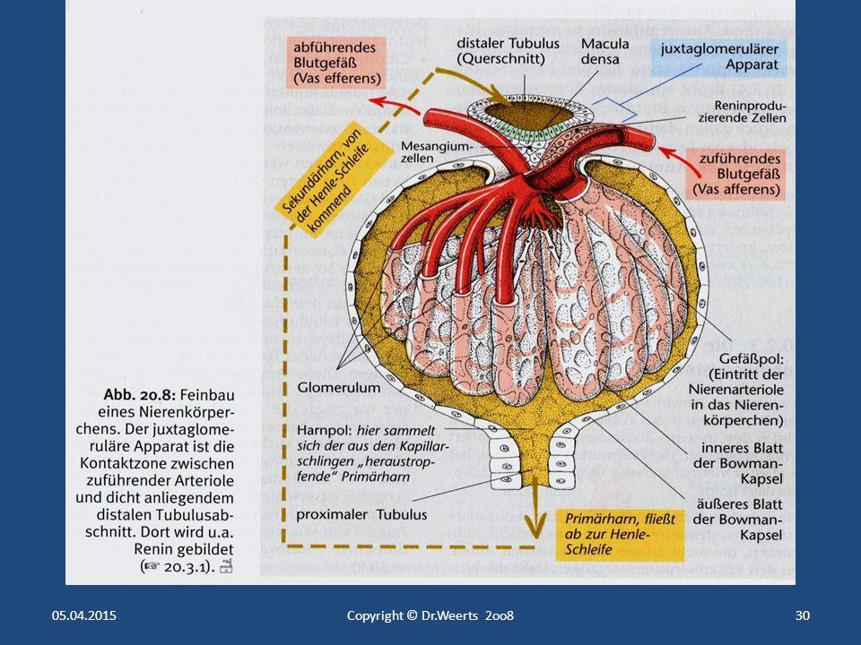Fein Ableitenden Arteriole Galerie - Menschliche Anatomie Bilder ...