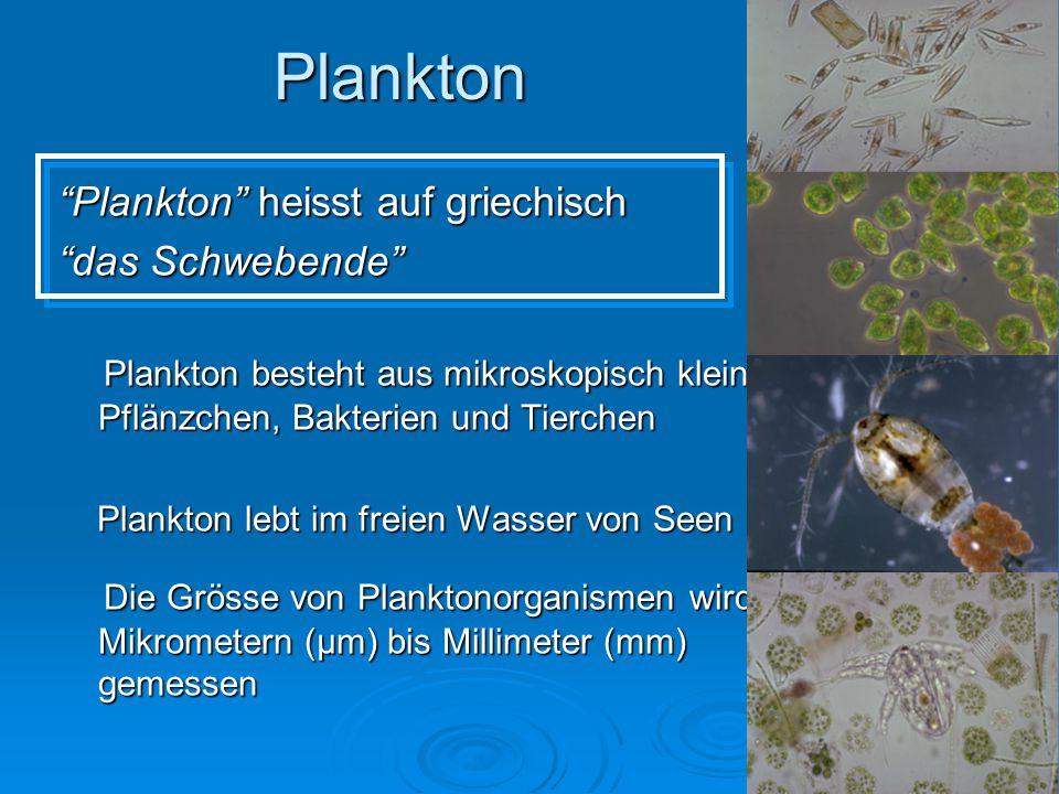Plankton Plankton heisst auf griechisch das Schwebende