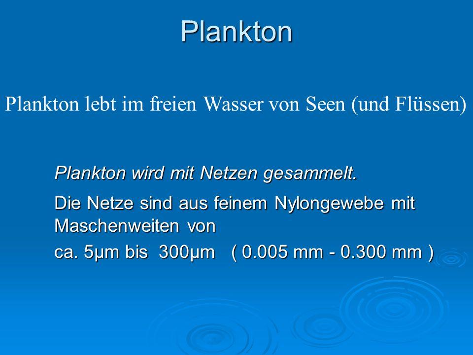 Plankton Plankton lebt im freien Wasser von Seen (und Flüssen)