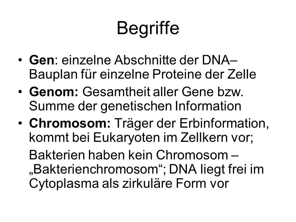 Begriffe Gen: einzelne Abschnitte der DNA– Bauplan für einzelne Proteine der Zelle.