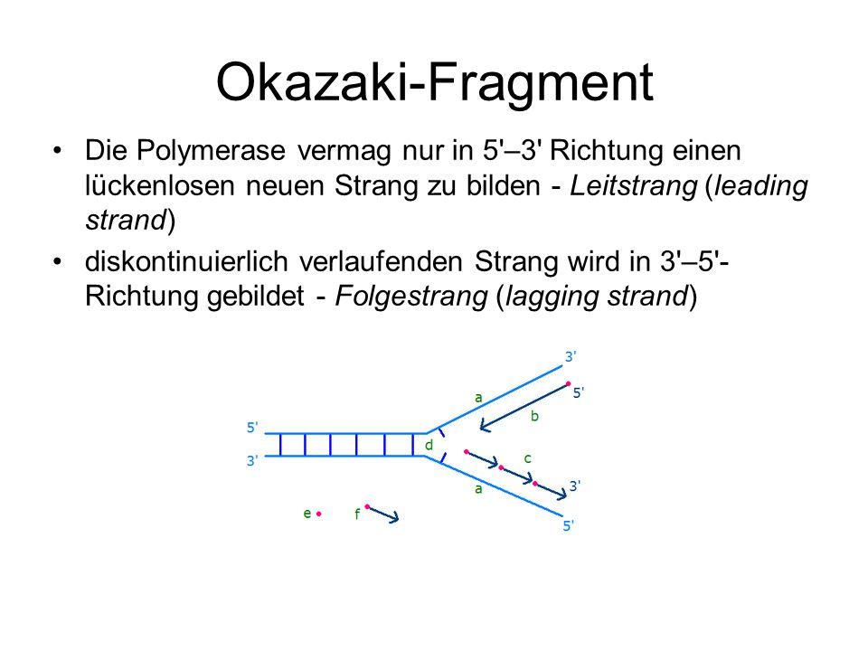 Okazaki-Fragment Die Polymerase vermag nur in 5 –3 Richtung einen lückenlosen neuen Strang zu bilden - Leitstrang (leading strand)