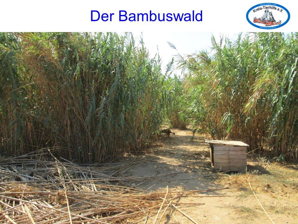 Der Bambuswald Der Bambuswald