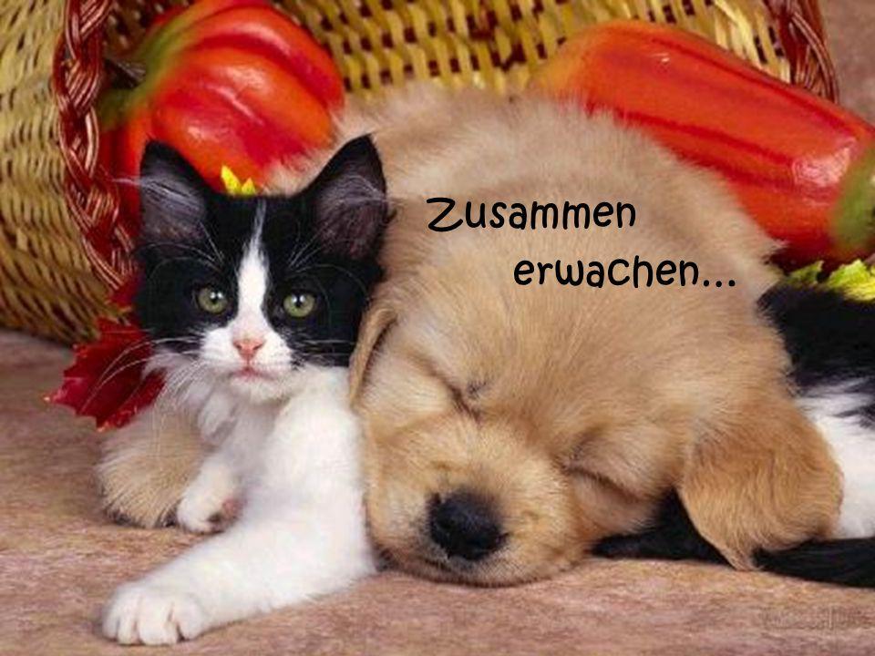 Zusammen erwachen…