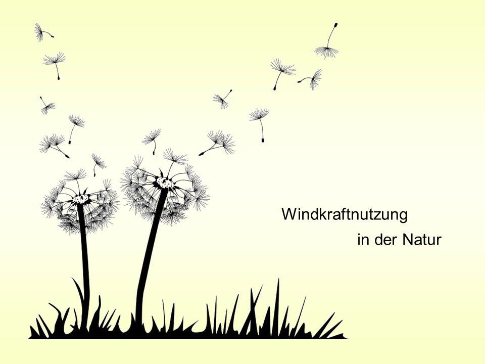 Windkraftnutzung in der Natur