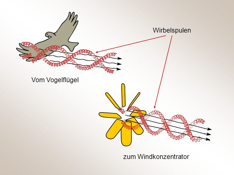 Wirbelspulen Vom Vogelflügel zum Windkonzentrator