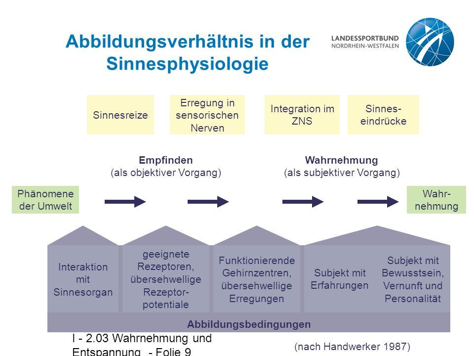 Abbildungsverhältnis in der Sinnesphysiologie