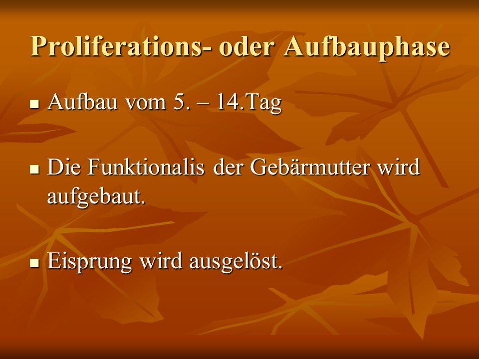 Proliferations- oder Aufbauphase