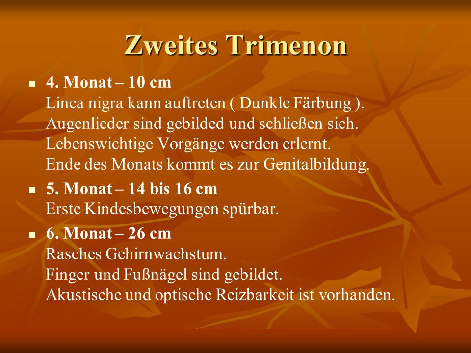 Zweites Trimenon 4. Monat – 10 cm