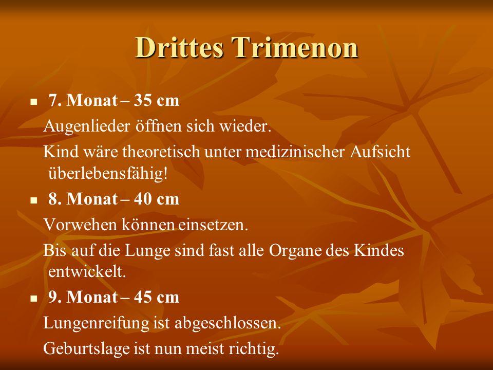 Drittes Trimenon 7. Monat – 35 cm Augenlieder öffnen sich wieder.