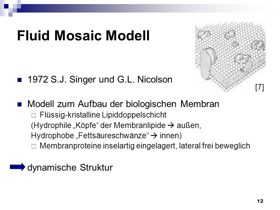 Fluid Mosaic Modell 1972 S.J. Singer und G.L. Nicolson