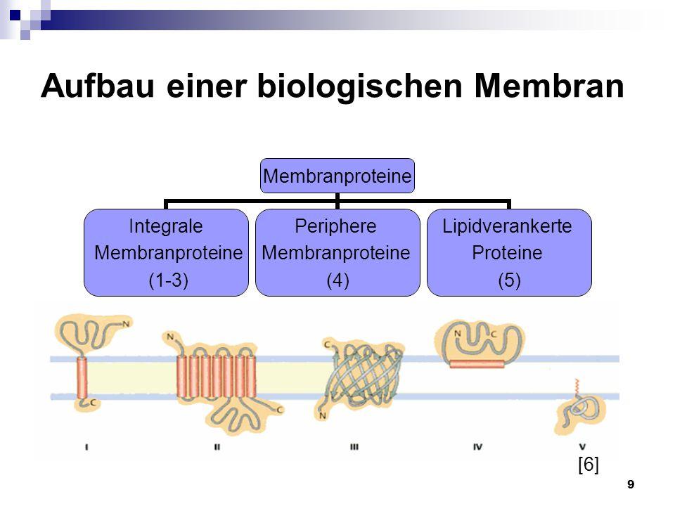 Aufbau einer biologischen Membran