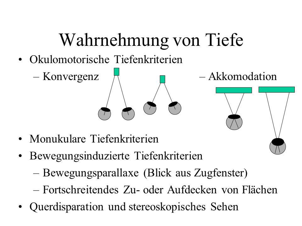 Wahrnehmung von Tiefe Okulomotorische Tiefenkriterien