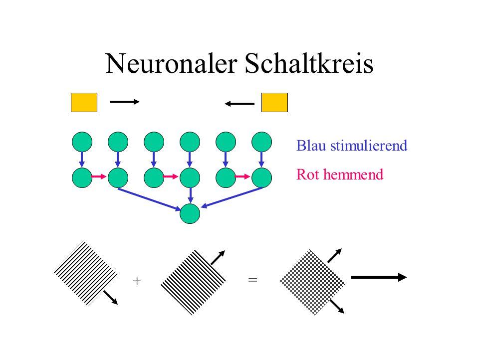 Neuronaler Schaltkreis