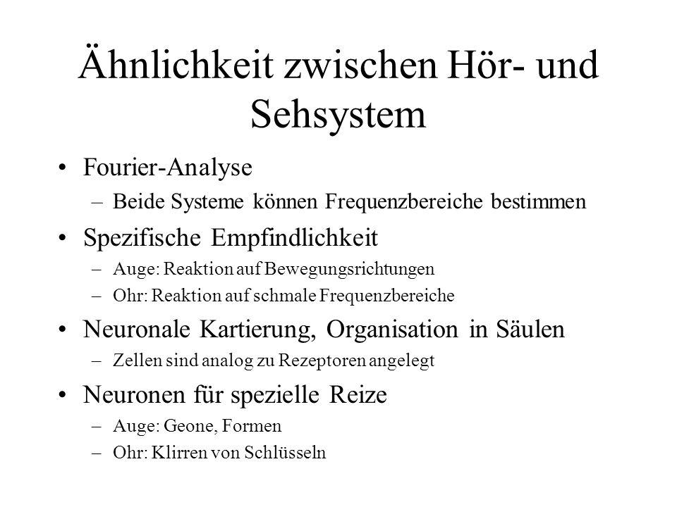 Ähnlichkeit zwischen Hör- und Sehsystem