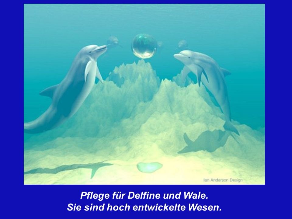 Pflege für Delfine und Wale. Sie sind hoch entwickelte Wesen.
