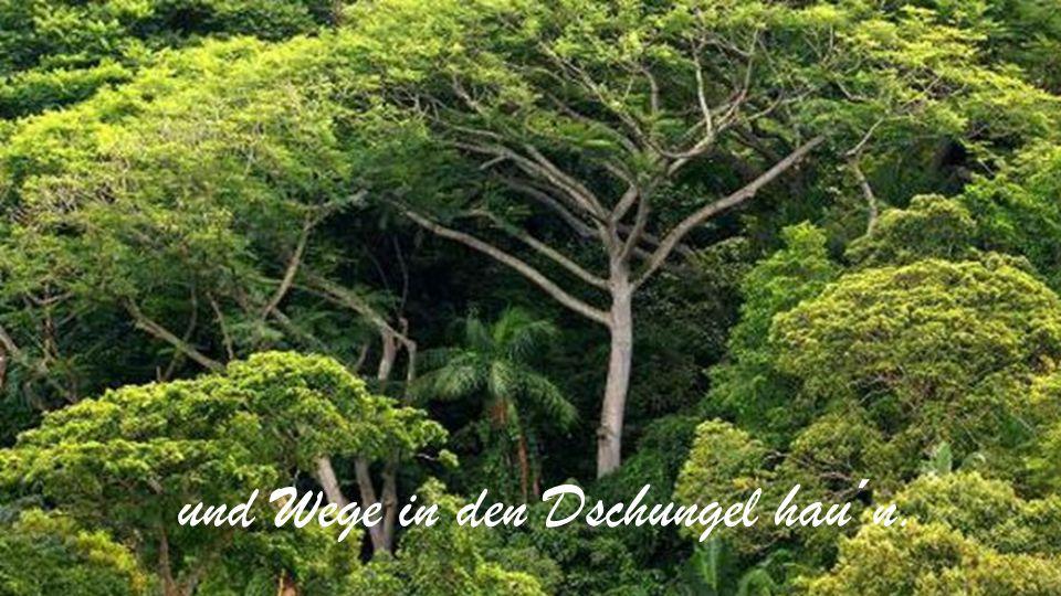 und Wege in den Dschungel hau´n.