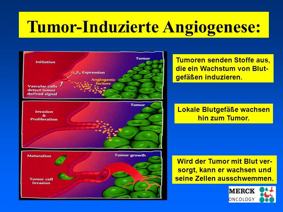 Tumor-Induzierte Angiogenese: