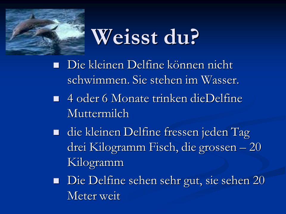 Weisst du Die kleinen Delfine können nicht schwimmen. Sie stehen im Wasser. 4 oder 6 Monate trinken dieDelfine Muttermilch.