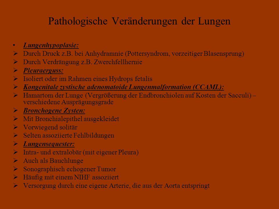 Pathologische Veränderungen der Lungen