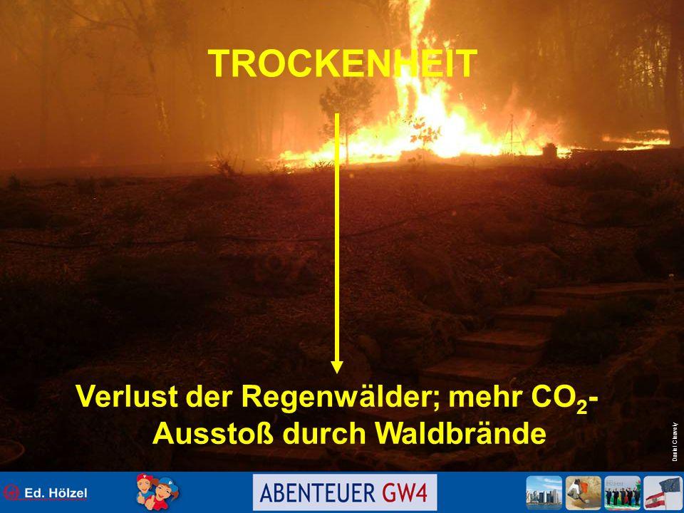 Verlust der Regenwälder; mehr CO2- Ausstoß durch Waldbrände