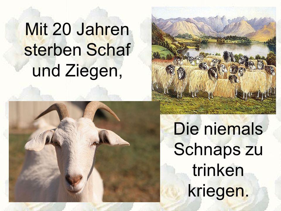 Mit 20 Jahren sterben Schaf und Ziegen,