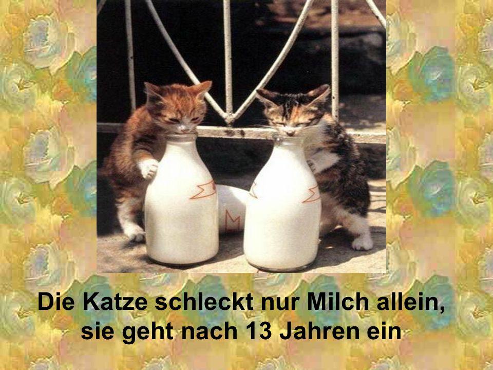 Die Katze schleckt nur Milch allein, sie geht nach 13 Jahren ein