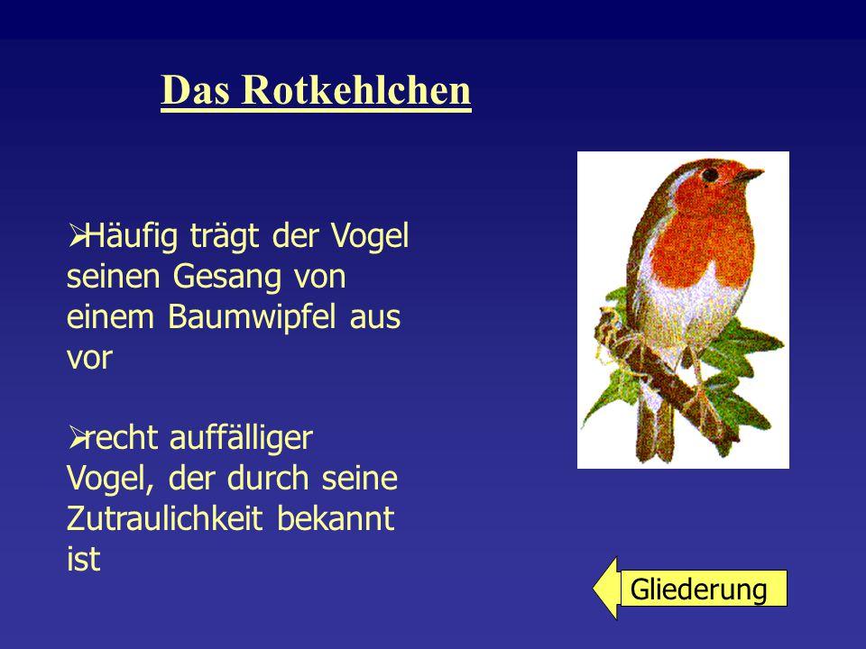 Das Rotkehlchen Häufig trägt der Vogel seinen Gesang von einem Baumwipfel aus vor.